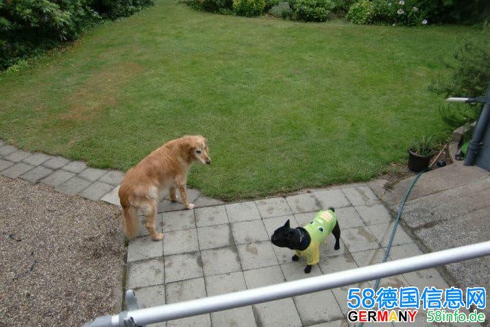 近杜塞neuss提供北威州境内 狗狗 宠物代养托管服务