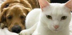 New加拿大爱護全球亍头流浪动物華人協会联盟2021(英国分